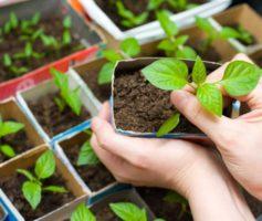Que tal você ter a sua própria horta em casa?